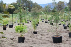 Coquitlam reforestation