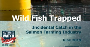 WWSS_Wild_Fish_Trapped_Incidental_Catch-front page only